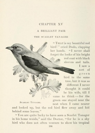 "Scarlet tanager by Louis Agassiz Fuertes from ""Citizen Bird"""