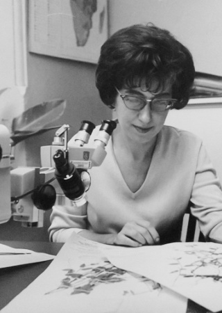 Cleofe Calderon examining a specimen at the National Museum of Natural History | Smithsonian Institution Archives, Cleofe Calderon, Accession 85-167, Soderstrom, Thomas R, Thomas R. Soderstrom Correspondence, Box 1