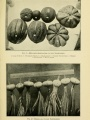 "Melons and onion varieties from ""El cultivo de legumbres en Puerto Rico."""